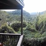 Different view from balcony of tree house 25