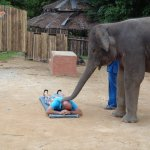 massage from an elephant