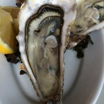 Oysters from the bay of Cancale - outstanding