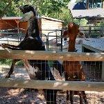 Petting zoo area