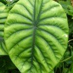 Just one exquisite leaf