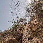 Photo de Battambang Bat Caves