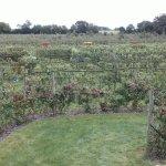 Royal oak farm orchard