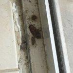 Photo of Nest