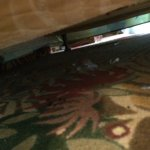 under our bed. yuck!