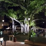 The Banyan Court Foto