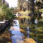 Swimming hole, Lakes Basin campground. (*Otter warning!)