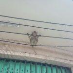 Phra Prang Sam Yot Foto