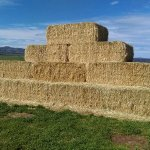 The haystack!