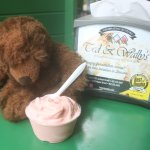 Even my traveling bear loves red bean ice cream!