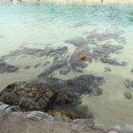 Glasklares Wasser. Die Steine sind Morgens noch nicht mit Wasser bedeckt