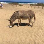 Playa de Cofete Foto