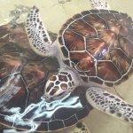 Tortugranja (Turtle Farm) Foto