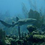 Belize Diving Services Foto