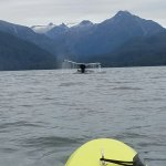 A whale diving right in front of our sea kayak!