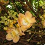Foto de Carambola Botanical Gardens & Trails