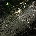 Huge spider and his web