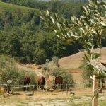 Foto di Agriturismo Il Vecchio Maneggio