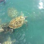 Cayman Turtle Farm: Island Wildlife Encounter Foto