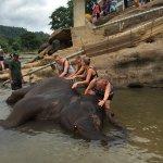 Hotel Elephant Park Foto