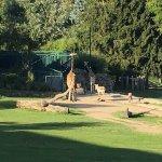 Impressionen vom Ausblick in den Zoo