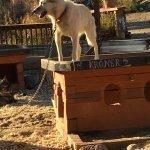 One of Jeff's dogs, Kroner