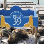 Walk to Pier 39 from hotel. The sea lions attract crowds. Not sure who is watching who!!!