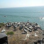 Photo de BEST WESTERN PLUS Shore Cliff Lodge