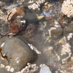 can you find a hiding crab?