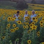 Standing in a field of sunflowers just below Pieve A Pava.
