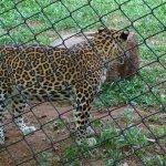 Photo de Thiruvananthapuram Zoo