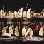Foto de Whaling Museum