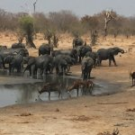 Elephants and Sable at nearby watering hole