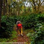 Trek inside coffee plantation