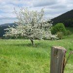 Le printemps là haut sur la montagne ....