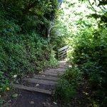 Cascade Head Trail Foto