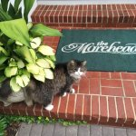 Elvis is just one of the friendly faces to greet you at the Morehead Inn.