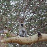 monkeys in de garden