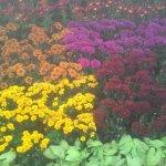Foto de Lalbagh Botanical Garden