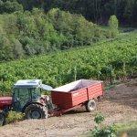 Foto de Agriturismo il Girasole
