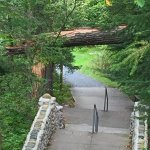 Downed tree over steps to Lake Itasca