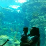 Photo de The Florida Aquarium