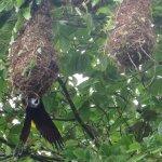 Rainforest birdwatching Costa Rica.