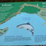 Kokanee Trail