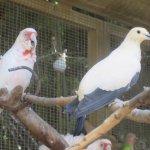 Birds, Fresno Chaffee Zoo, Fresno, CA