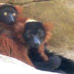 Monkeys, Fresno Chaffee Zoo, Fresno, CA