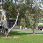 Campervan Site amongst Olive Trees