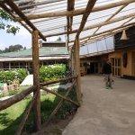 Foto de Mountain Gorilla View Lodge
