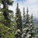 Sulphur Mountain Foto