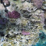 Foto di Domina Coral Bay Aquamarine Hotel